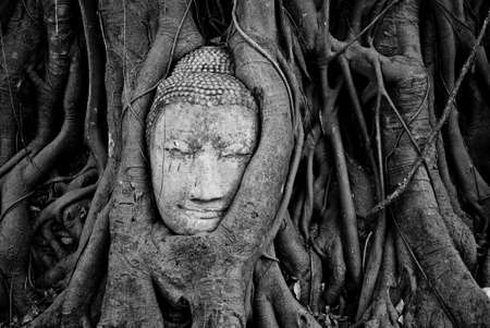 Stone budda head traped in the tree roots at Wat Mahathat, Ayutthaya, Thailand  photo