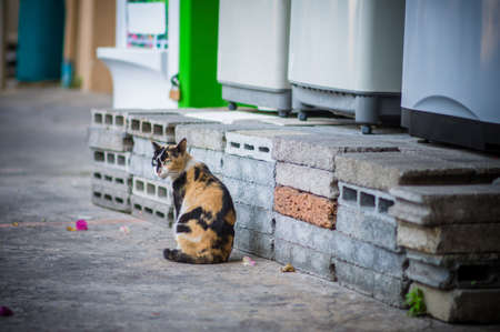 Cat sitting by a block of bricks photo