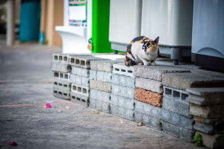 cat sitting on top of a block of bricks photo