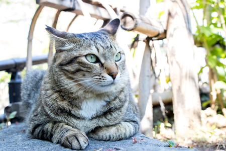 Cute cat with fierce face with garden background