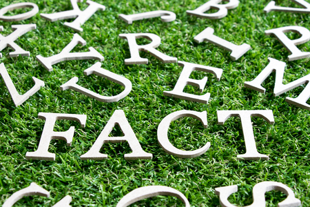Wood alphabet in wording fact  on artificial green grass background