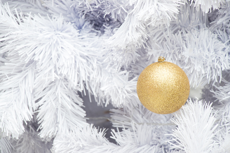 Gold ball on white branch of chrismas tree background (Decoration for Christmas and New year festival