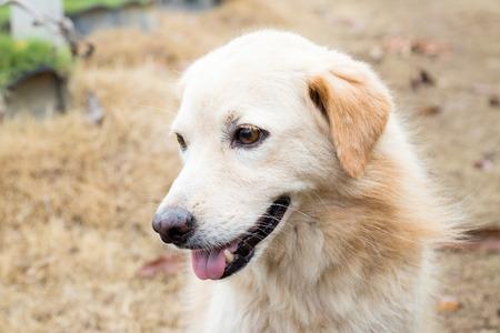 Brown color hybrid dog waiting for owner