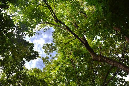 大きな木と空の下で