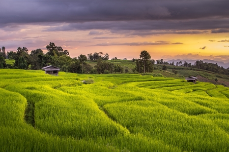 chiang mai: Beautiful terrace rice fields in Mae chaem, Chiang mai Thailand Stock Photo