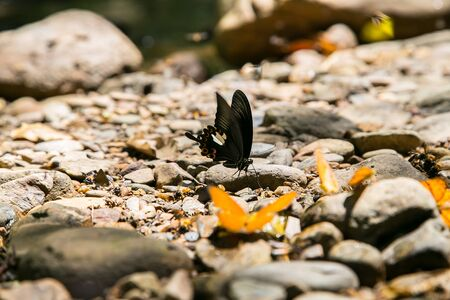 Butterfly at Kaeng Krachan National Park in Phetchaburi Province Thailand