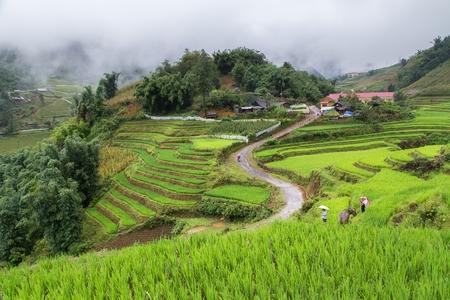 Het gebied van rijstterrassen in Rainning-seizoen in Sapa, Vietnam.