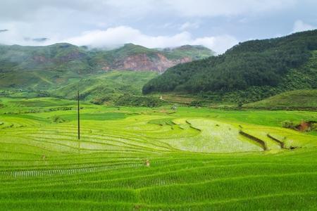 yuan yang: Rice terraces field in Rainning season in Tule ,Vietnam.