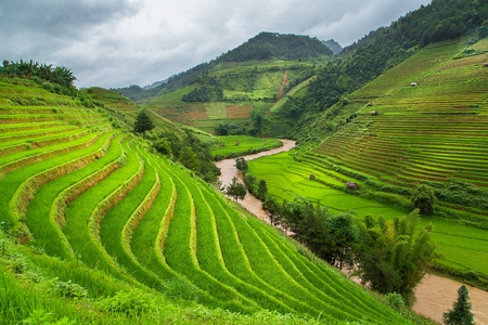 緑の水田の Mu 倉チャイ、ベトナムの棚田 写真素材