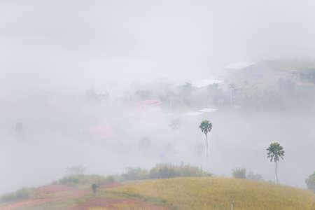 foliage tree: misty morning sunrise in mountain at Khao-kho Phetchabun,Thailand