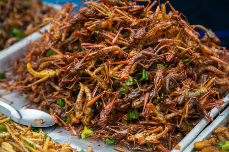 mealworm: Fried grasshoppers at Bangkok , Thailand Stock Photo