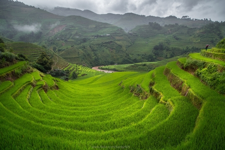 terraced field: Green Rice fields on terraced in Mu cang chai, Vietnam