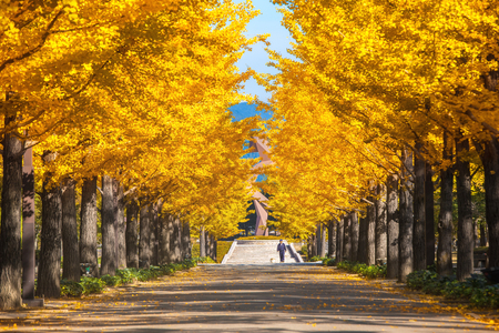 日本の東京でイチョウ並木