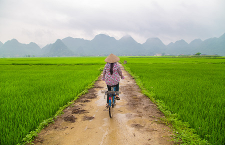 plowing: Local woman on her bicycle along a rice field in Bac Son, Vietnam Stock Photo