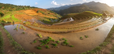 terraced field: Terraced ricefield in water season at Mu Cang Chai , Vietnam Editorial