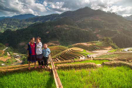 MUCANGCHAI, VIETNAM, MAY 24 , 2017: The Farmers can not be Identified from the terraced rice fields harvest .Mu Cang Chai is a district of Yen Bai province, in the northeastern region of Vietnam.