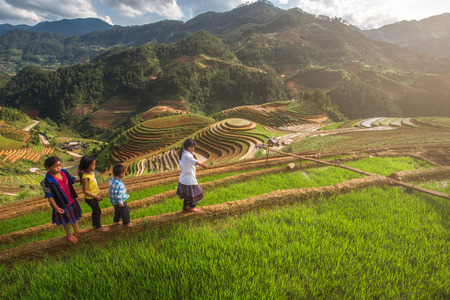 northeastern: MUCANGCHAI, VIETNAM, MAY 24 , 2017: The Farmers can not be Identified from the terraced rice fields harvest .Mu Cang Chai is a district of Yen Bai province, in the northeastern region of Vietnam.