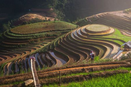 yuan yang: Terraced ricefield Panorama in water season at Mu Cang Chai , Vietnam
