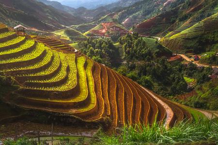 Terraced ricefield in water season in laocai, Vietnam Stock Photo