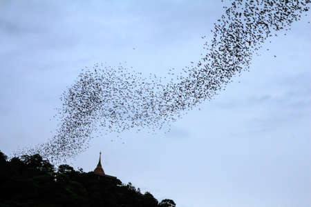 ratchaburi: Hundred Million Bats at Wat Khao Chong Pran, Ratchaburi Thailand