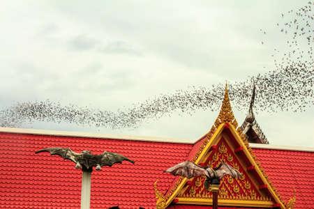 ratchaburi: Hundred Million Bats at Wat Khao Chong Pran, Ratchaburi Thailand