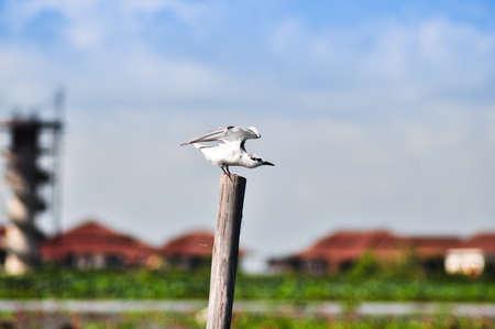 water fowl: water fowl