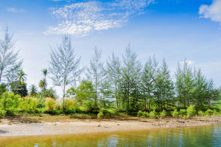 ironwood: pine tree