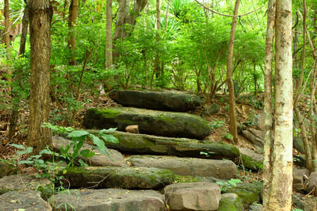 forest path with stone way photo