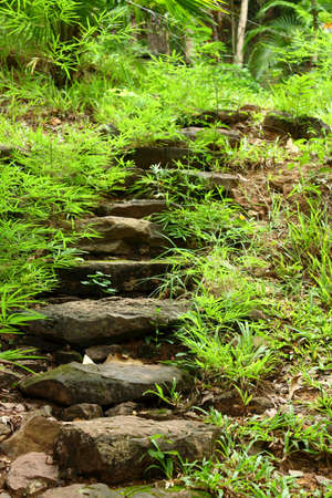 Stone walkway winding in garden  photo