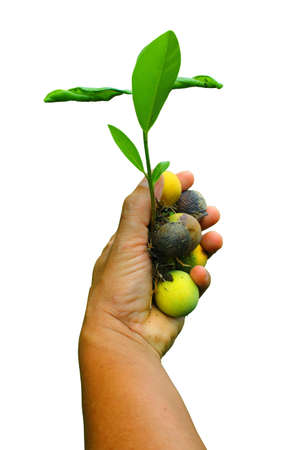 Hand and plant isolated on white background  photo