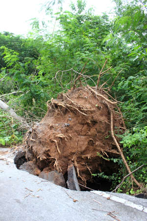 Road obstructed by fallen tree Stock Photo