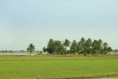 the rice farm in forest photo