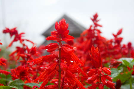 red flowers at the nature garden . photo