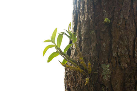 Orchid on the tree in forest, Thailand  photo