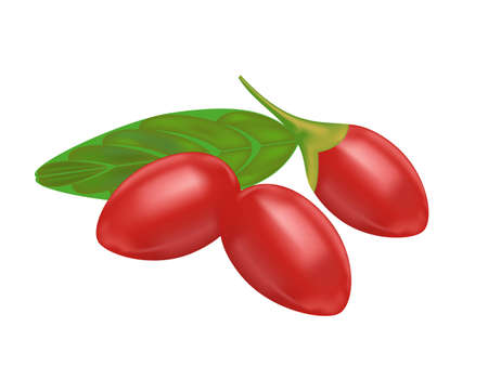 goji berry on white background,drawing by illustration Vector