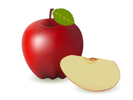 Two red apples on a white background  Vector