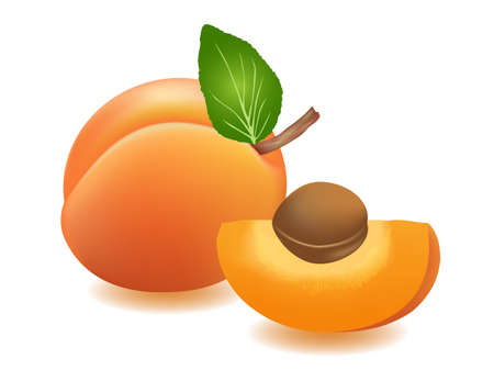 Vector illustration  Apricots with leaf and seed