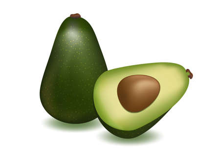 vector illustration  ripe avocado on white background