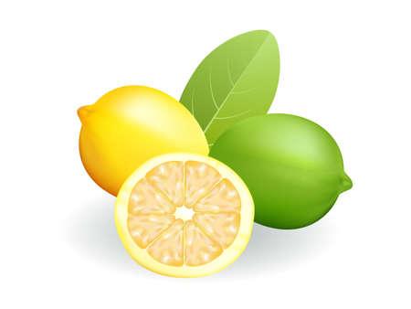 vector illustration   Lemon and lime on white background