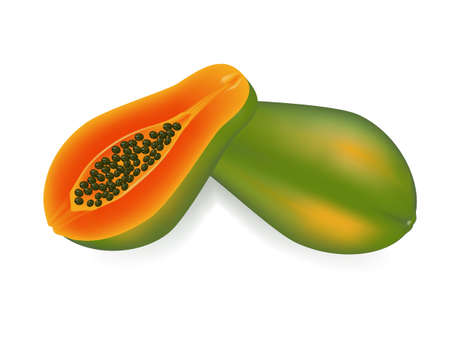 vector illustration   papaya on white background