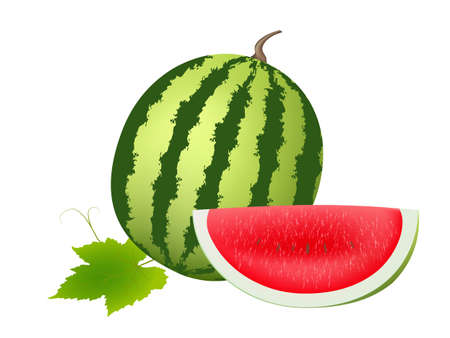 illustration of juicy water melon kept on white isolated background  Vector