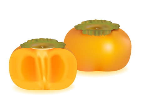 vector illustration . Persimmons on white background