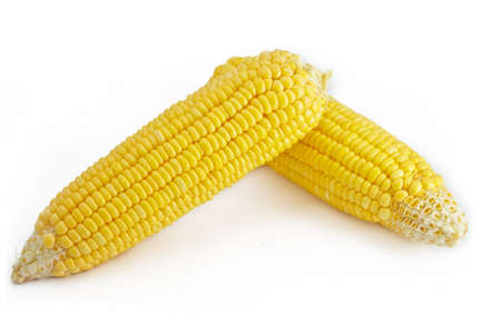 2 of corns on the white background photo