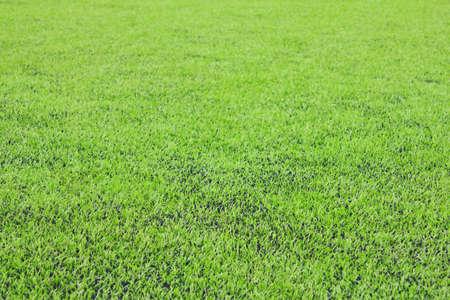 prato sintetico: Foto di un campo sportivo sintetico erba verde