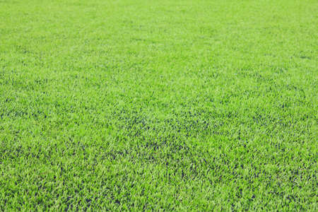goalline: Photo of a green synthetic grass sports field