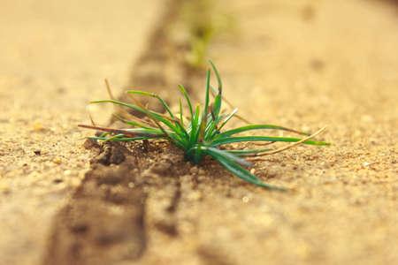 Green grass growing through crack of concrete