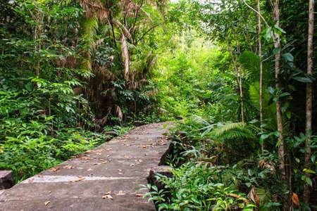 wilds: concrete bridge through the mangrove reforestation