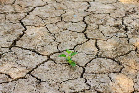 Fresh green tree growing through dry cracked soil  photo