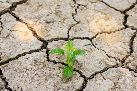 Fresh green tree growing through dry cracked soil