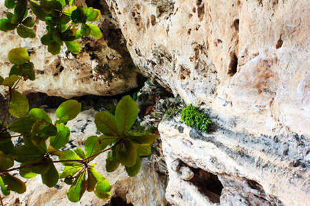 overhang: The lonely tree on a rock overhang shivers